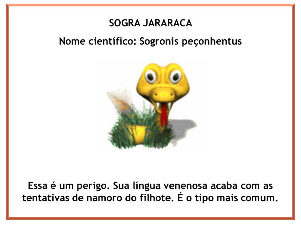 SOGRA JARARACA Nome científico: Sogronis peçonhentus Essa é um perigo. Sua língua venenosa acaba com as tentativas de namoro do filhote. É o tipo mais