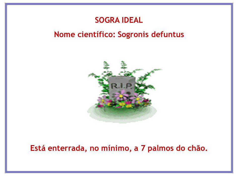 SOGRA IDEAL Nome científico: Sogronis defuntus Está enterrada, no mínimo, a 7 palmos do chão.