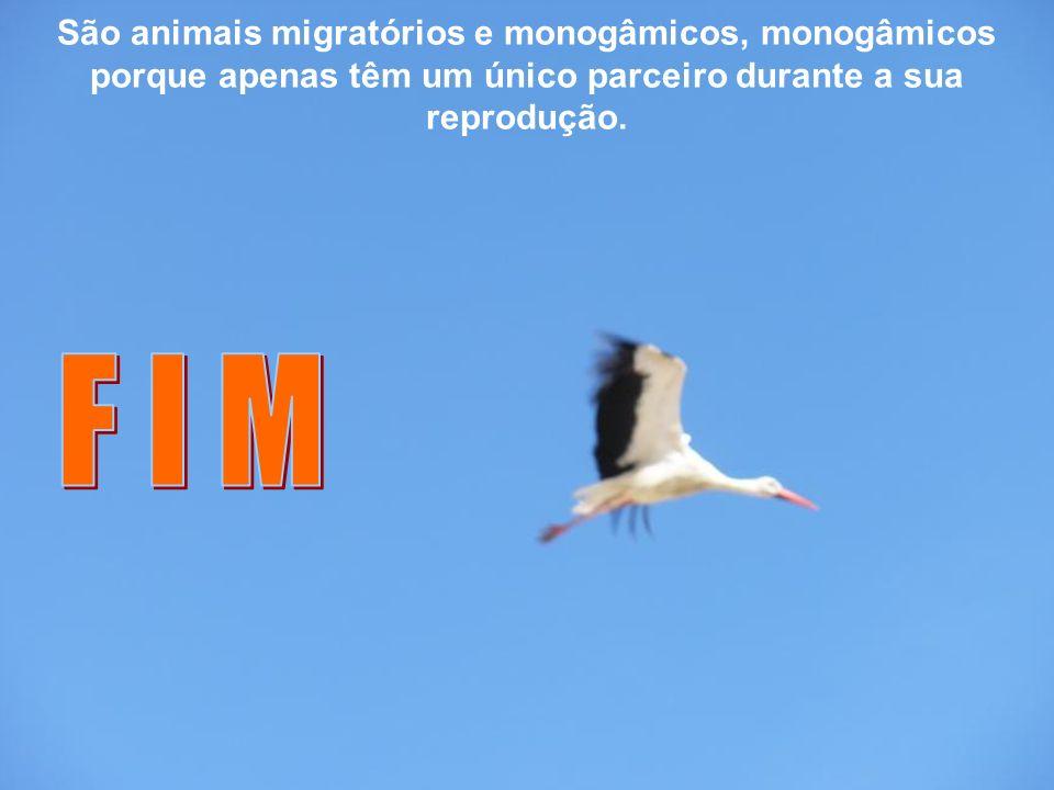 O seu habitat é variado e a alimentação inclui pequenos vertebrados encontrados na Ria Formosa (Faro – Ludo – Quinta do Lago)