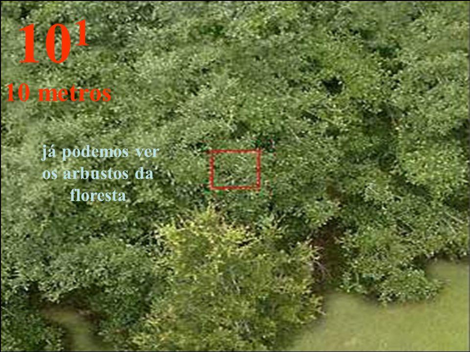 já podemos ver os arbustos da floresta 10 1 10 metros
