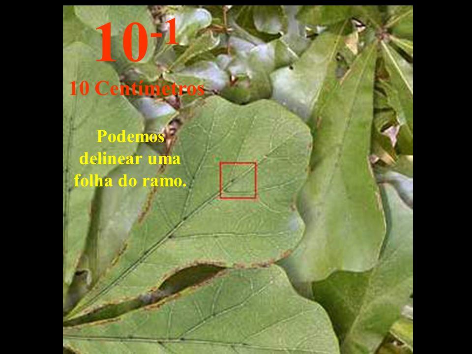 Podemos delinear uma folha do ramo. 10 -1 10 Centímetros