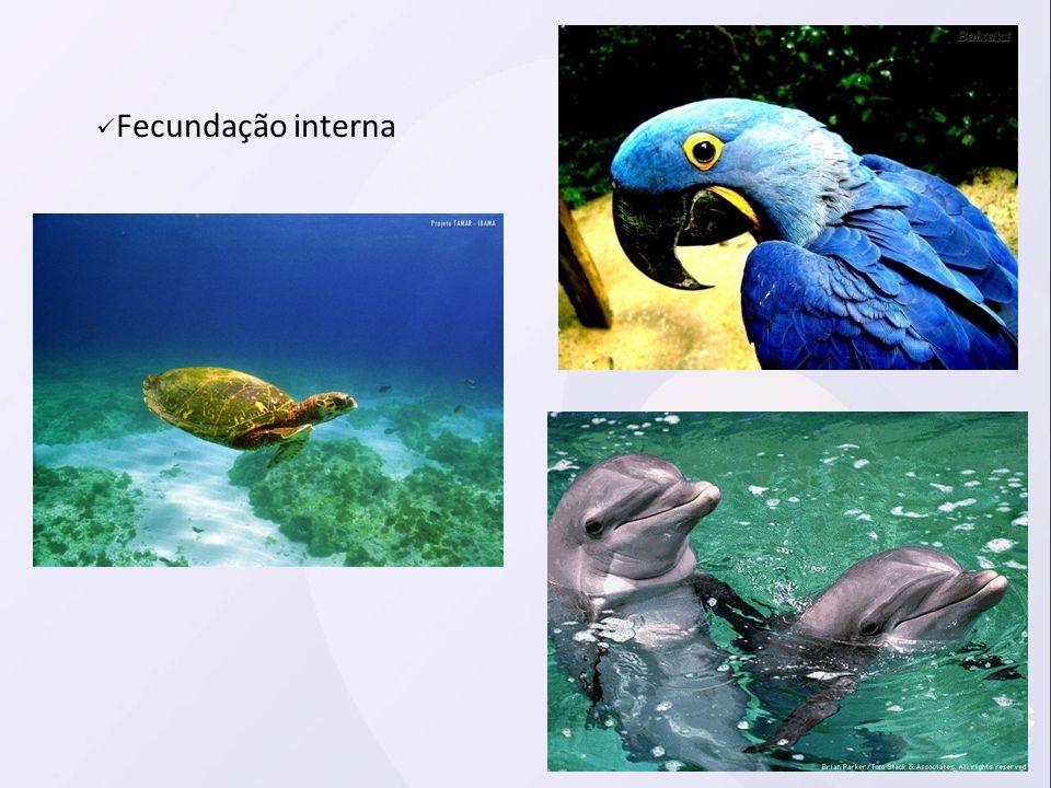 Fecundação interna