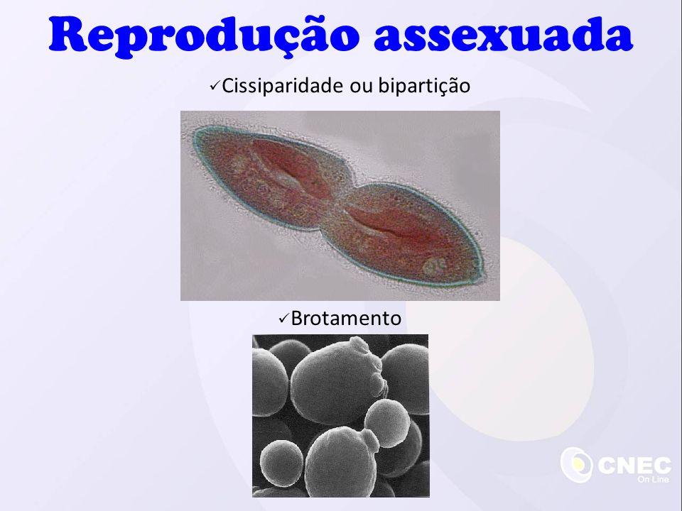 Cissiparidade ou bipartição Brotamento Reprodução assexuada
