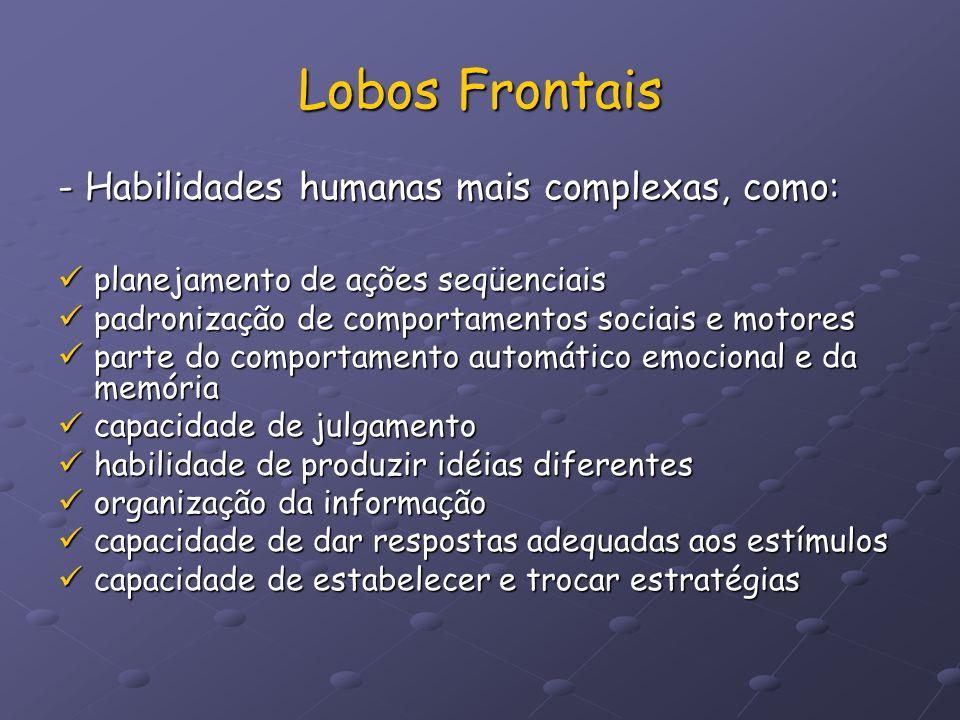 Lobos Frontais - Habilidades humanas mais complexas, como: planejamento de ações seqüenciais planejamento de ações seqüenciais padronização de comport