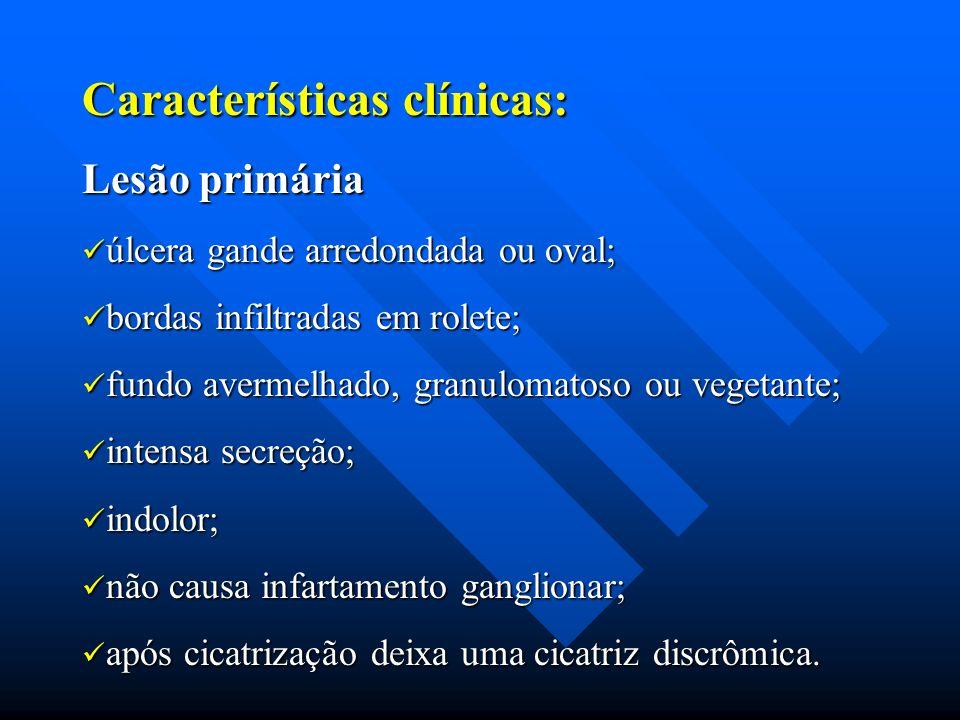 Características clínicas: Lesão primária úlcera gande arredondada ou oval; úlcera gande arredondada ou oval; bordas infiltradas em rolete; bordas infi
