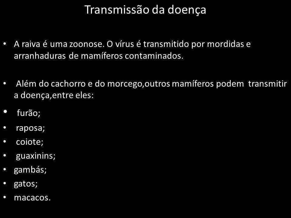 Transmissão da doença A raiva é uma zoonose.