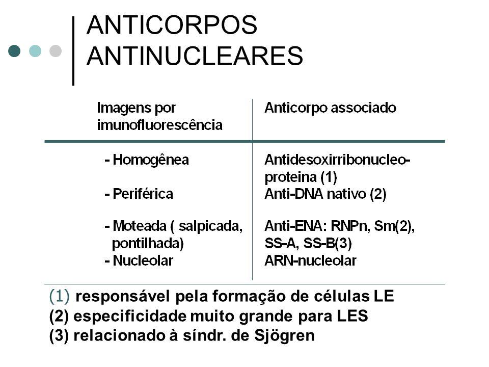 ANTICORPOS ANTINUCLEARES (1) responsável pela formação de células LE (2) especificidade muito grande para LES (3) relacionado à síndr. de Sjögren