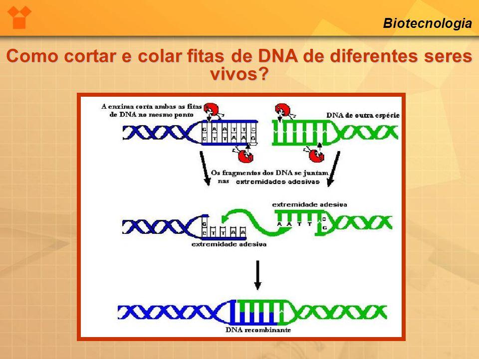 Biotecnologia Como cortar e colar fitas de DNA de diferentes seres vivos?