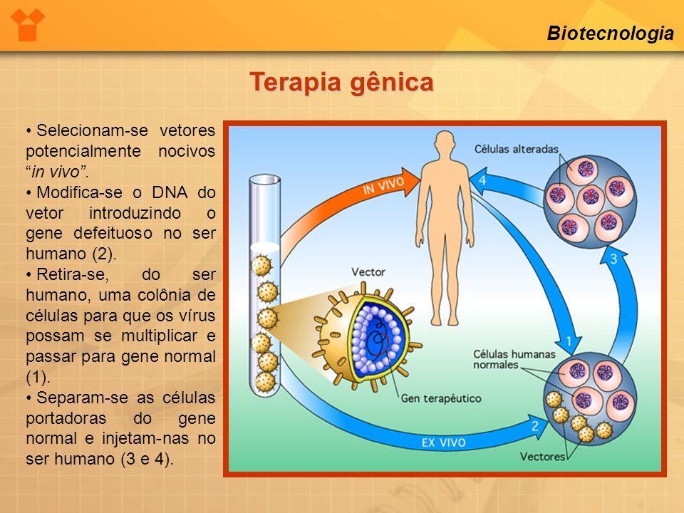 Biotecnologia Terapia gênica Selecionam-se vetores potencialmente nocivosin vivo. Modifica-se o DNA do vetor introduzindo o gene defeituoso no ser hum