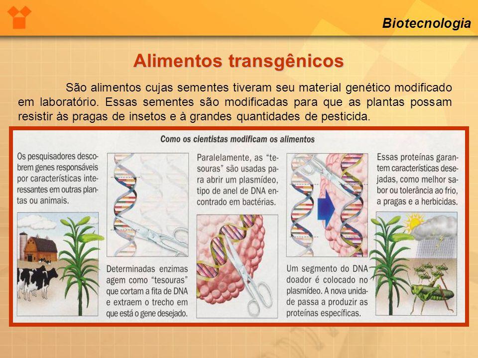 Biotecnologia Alimentos transgênicos Aspectos positivos: Aumento na produção de alimentos.