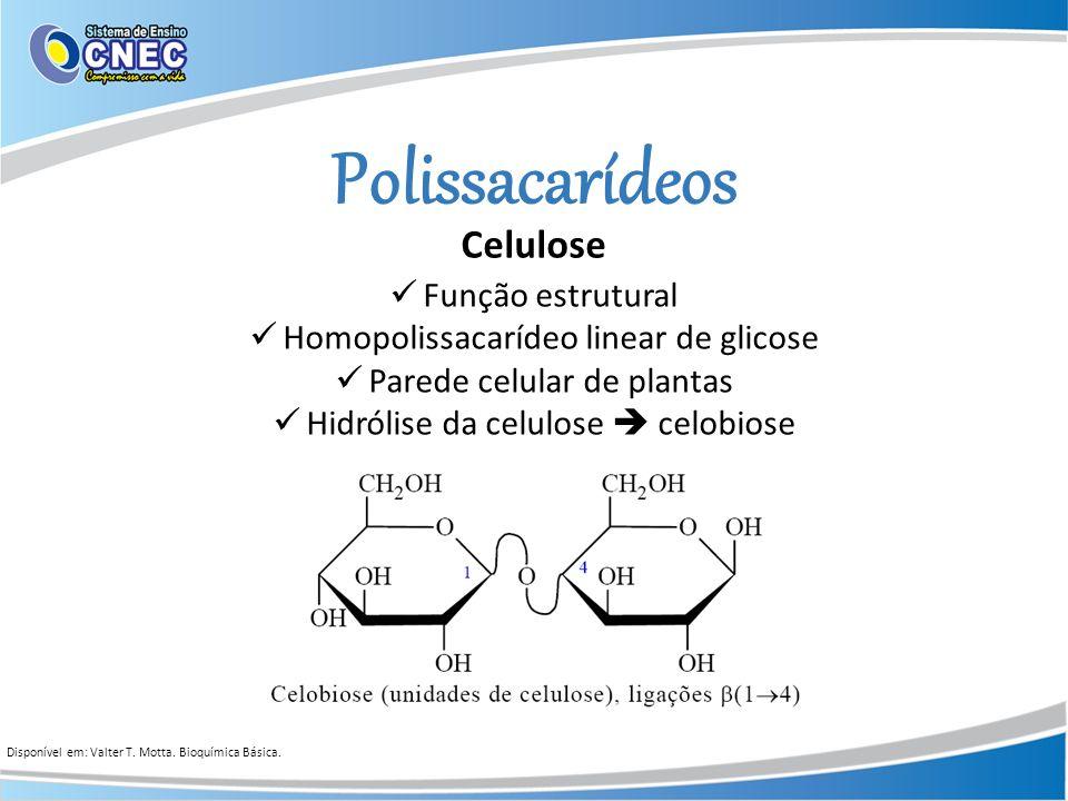 Polissacarídeos Celulose Função estrutural Homopolissacarídeo linear de glicose Parede celular de plantas Hidrólise da celulose celobiose Disponível e