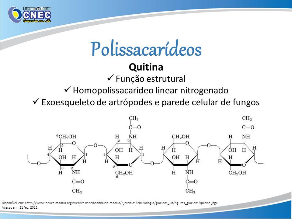 Polissacarídeos Quitina Função estrutural Homopolissacarídeo linear nitrogenado Exoesqueleto de artrópodes e parede celular de fungos Disponível em:.