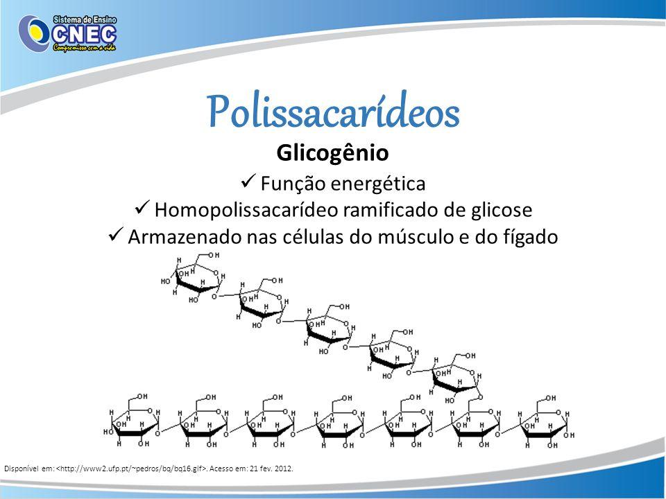 Polissacarídeos Glicogênio Função energética Homopolissacarídeo ramificado de glicose Armazenado nas células do músculo e do fígado Disponível em:. Ac