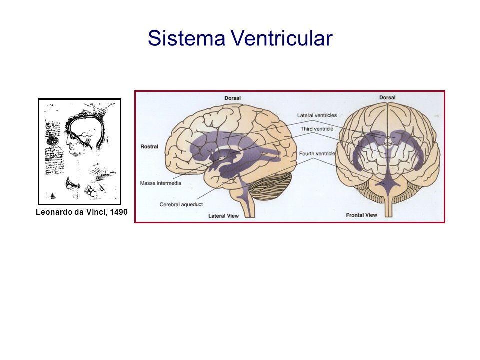 Alterações do LCR em infecções do SNC Tipos de Infecções: Meningite bacteriana aguda Meningite tuberculosa Meningite e Encefalite Viral Neurosífilis Infecções por Fungos Infecções por Parasitas Neurosarcoidose...