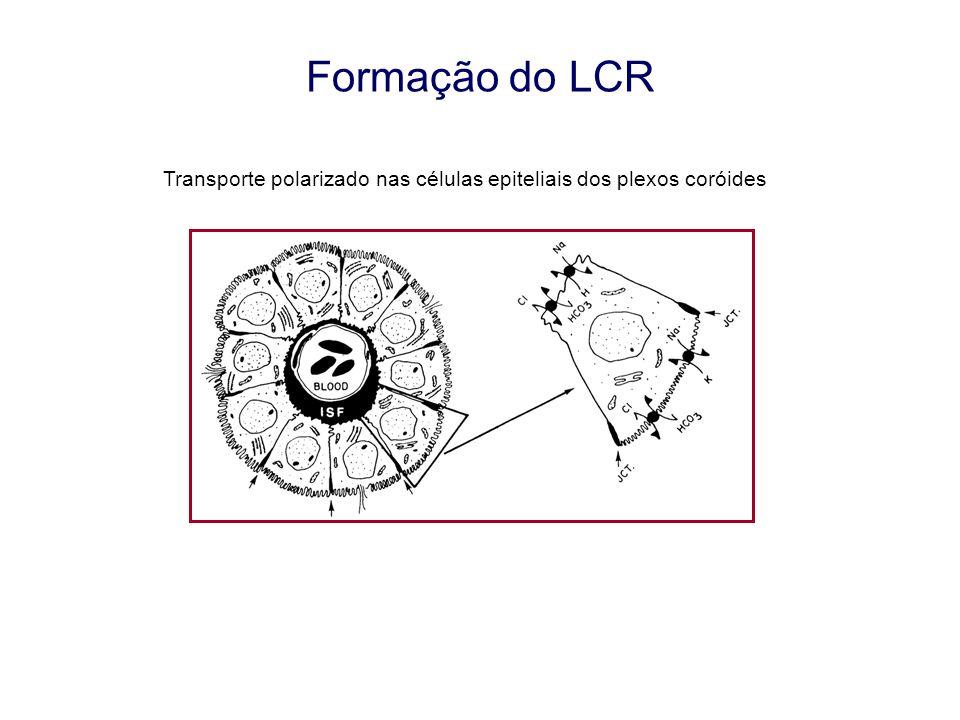 Formação do LCR Taxa de formação = 0,35 mL/min (~500 mL/dia) Aumenta com: Estimulação adrenérgica (cAMP) Tóxina da cólera (cAMP) Diminui com: Hipotermia Hiper-osmolaridade Aumento pressão CSF Agonistas receptor serotonina Antagonistas receptor dopamina D1 Vasopressina Acetozolamida (anidrase carbónica) Oubaína (Na-K-ATPase)