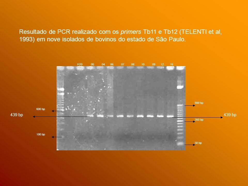 600 bp 100 bp 50 bp 350 bp 800 bp 439 bp H20 05 04 06 07 08 10 09 12 16 Resultado de PCR realizado com os primers Tb11 e Tb12 (TELENTI et al, 1993) em nove isolados de bovinos do estado de São Paulo.