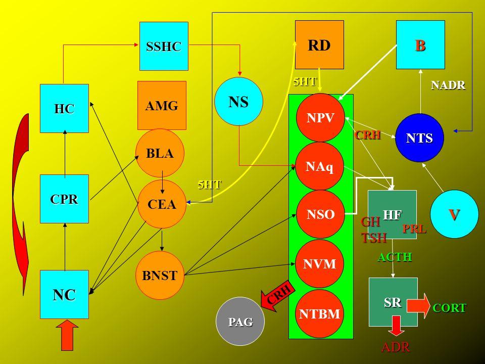 NC CPR HC AMG CEA BLA BNST NS RD NPV NAq NSO NVM NTS B HF SSHC 5HT NADR SR NTBM PAG ACTH CRH PRL 5HT CORT V CRH TSH GH ADR
