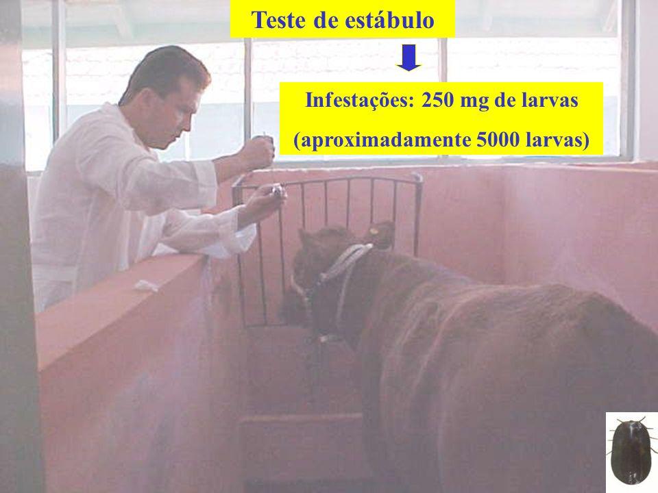 Infestações: 250 mg de larvas (aproximadamente 5000 larvas) Teste de estábulo