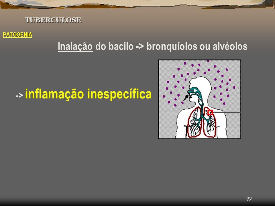22 TUBERCULOSE PATOGENIA Inalação do bacilo -> bronquíolos ou alvéolos -> inflamação inespecífica