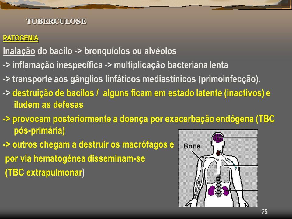 25 TUBERCULOSE PATOGENIA Inalação do bacilo -> bronquíolos ou alvéolos -> inflamação inespecífica -> multiplicação bacteriana lenta -> transporte aos