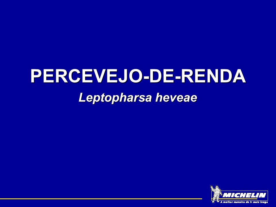PERCEVEJO-DE-RENDA Leptopharsa heveae