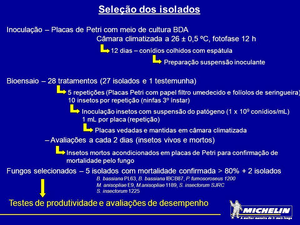Seleção dos isolados Inoculação – Placas de Petri com meio de cultura BDA Câmara climatizada a 26 ± 0,5 ºC, fotofase 12 h 12 dias – conídios colhidos