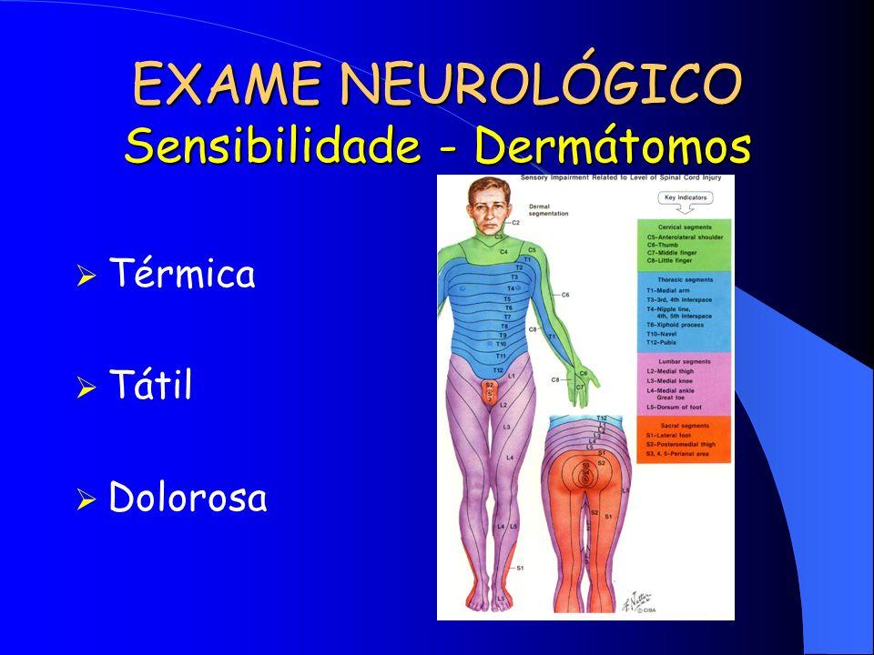 EXAME NEUROLÓGICO Sensibilidade - Dermátomos Térmica Tátil Dolorosa