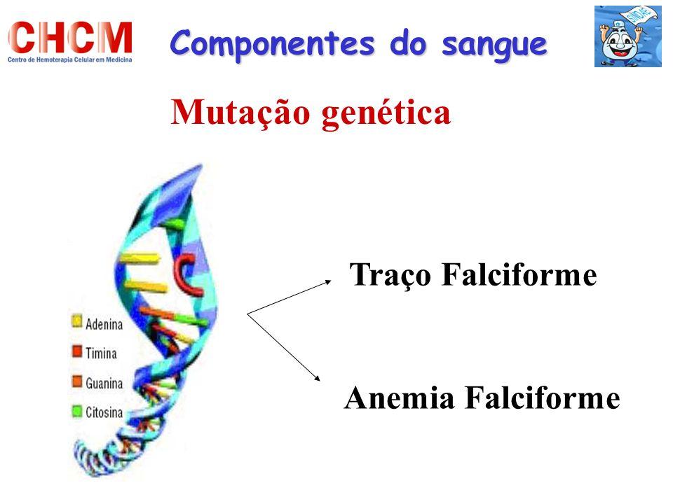 Componentes do sangue Mutação genética Traço Falciforme Anemia Falciforme