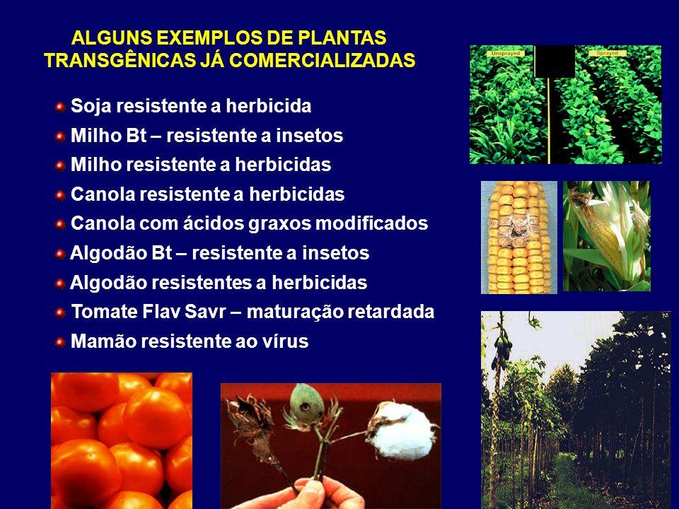 ALGUNS EXEMPLOS DE PLANTAS TRANSGÊNICAS JÁ COMERCIALIZADAS Soja resistente a herbicida Milho Bt – resistente a insetos Milho resistente a herbicidas C