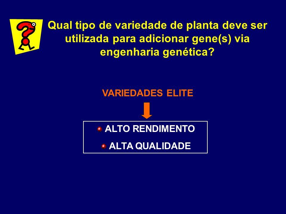 Qual tipo de variedade de planta deve ser utilizada para adicionar gene(s) via engenharia genética? VARIEDADES ELITE ALTO RENDIMENTO ALTA QUALIDADE