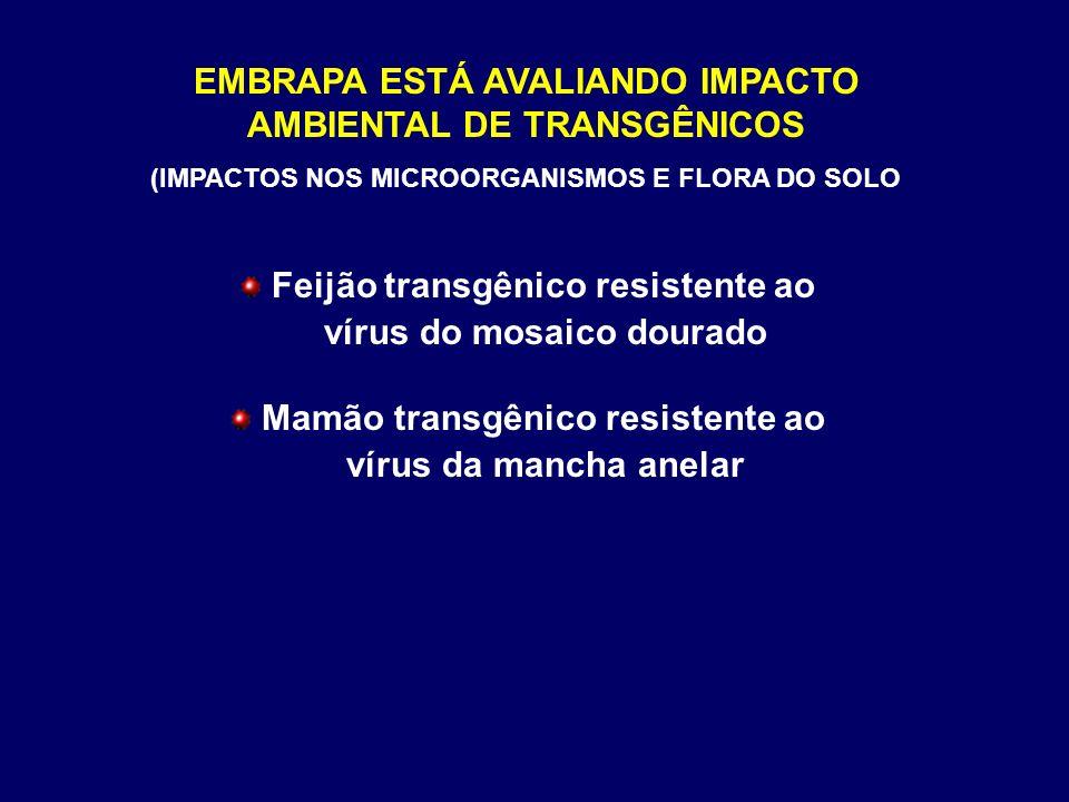EMBRAPA ESTÁ AVALIANDO IMPACTO AMBIENTAL DE TRANSGÊNICOS (IMPACTOS NOS MICROORGANISMOS E FLORA DO SOLO Feijão transgênico resistente ao vírus do mosai