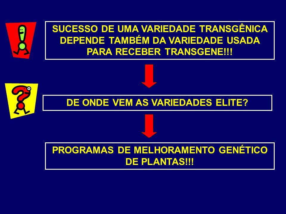 SUCESSO DE UMA VARIEDADE TRANSGÊNICA DEPENDE TAMBÉM DA VARIEDADE USADA PARA RECEBER TRANSGENE!!! DE ONDE VEM AS VARIEDADES ELITE? PROGRAMAS DE MELHORA