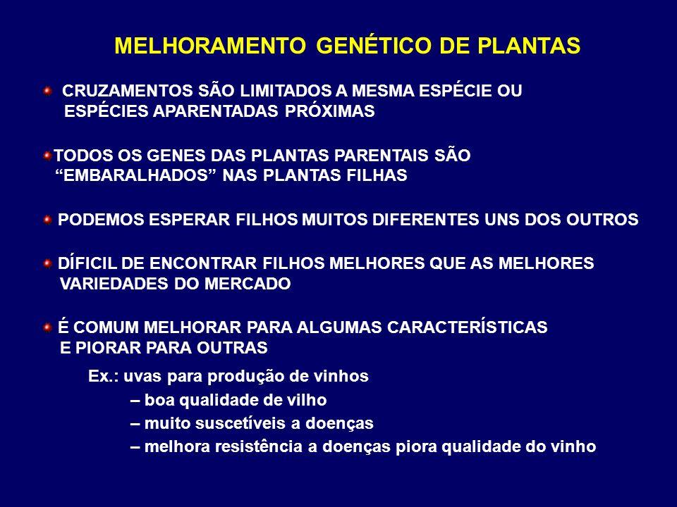 MELHORAMENTO GENÉTICO DE PLANTAS CRUZAMENTOS SÃO LIMITADOS A MESMA ESPÉCIE OU ESPÉCIES APARENTADAS PRÓXIMAS TODOS OS GENES DAS PLANTAS PARENTAIS SÃO E