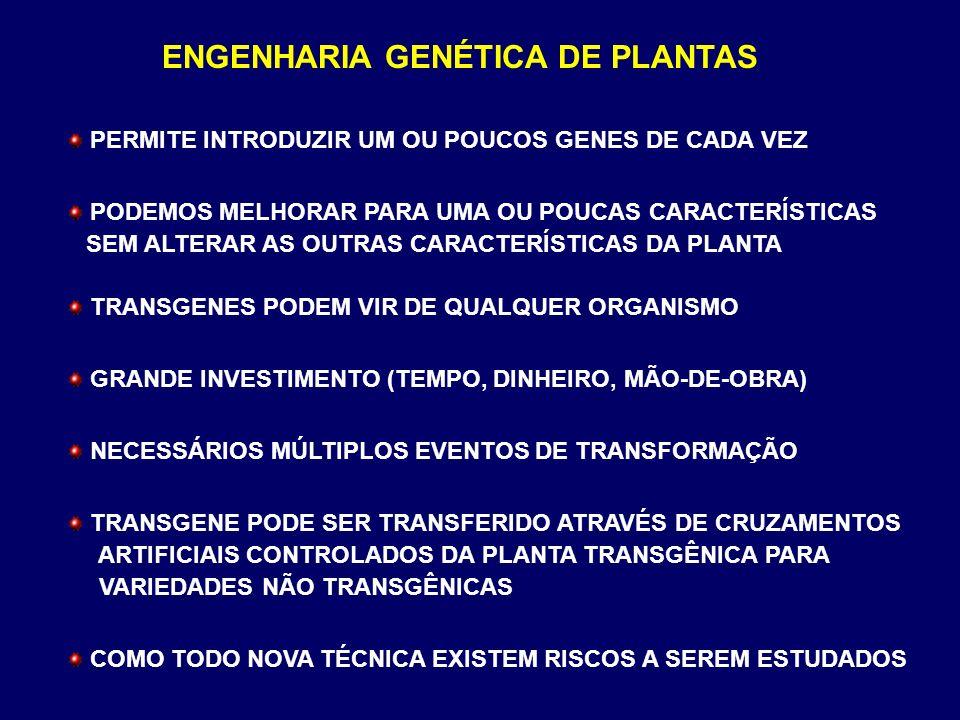 ENGENHARIA GENÉTICA DE PLANTAS PERMITE INTRODUZIR UM OU POUCOS GENES DE CADA VEZ PODEMOS MELHORAR PARA UMA OU POUCAS CARACTERÍSTICAS SEM ALTERAR AS OU