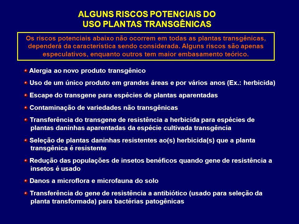 ALGUNS RISCOS POTENCIAIS DO USO PLANTAS TRANSGÊNICAS Alergia ao novo produto transgênico Uso de um único produto em grandes áreas e por vários anos (E