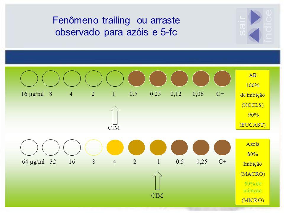 16 µg/ml 8 4 2 1 0.5 0.25 0,12 0,06 C+ CIM 64 µg/ml 32 16 8 4 2 1 0,5 0,25 C+ CIM AB 100% de inibição (NCCLS) 90% (EUCAST) Azóis 80% Inibição (MACRO)
