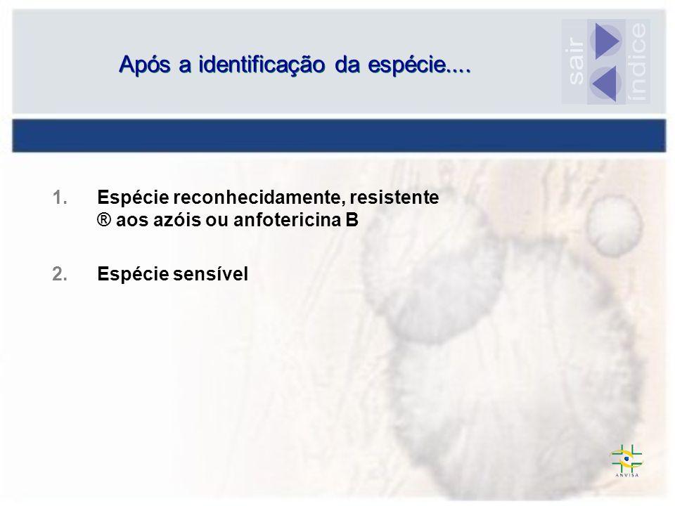 Após a identificação da espécie.... 1.Espécie reconhecidamente, resistente ® aos azóis ou anfotericina B 2.Espécie sensível