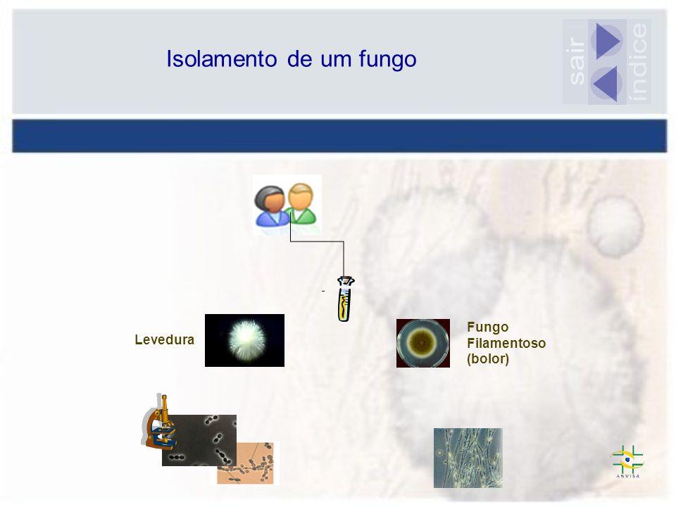 Levedura Fungo Filamentoso (bolor) Isolamento de um fungo