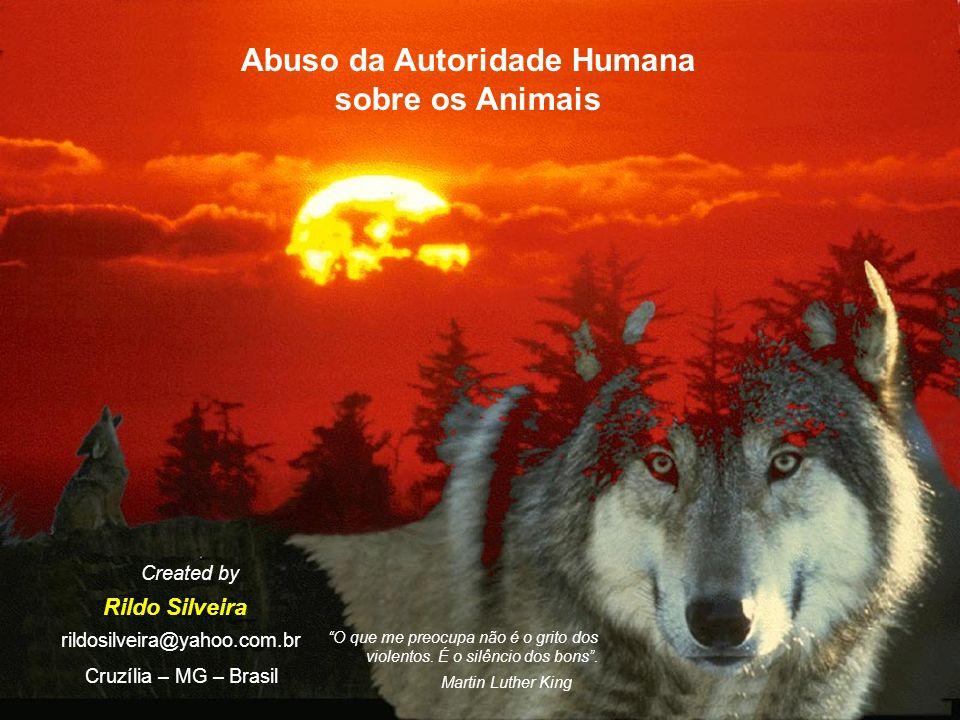 Abuso da Autoridade Humana sobre os Animais Rildo Silveira Created by rildosilveira@yahoo.com.br Cruzília – MG – Brasil O que me preocupa não é o grito dos violentos.