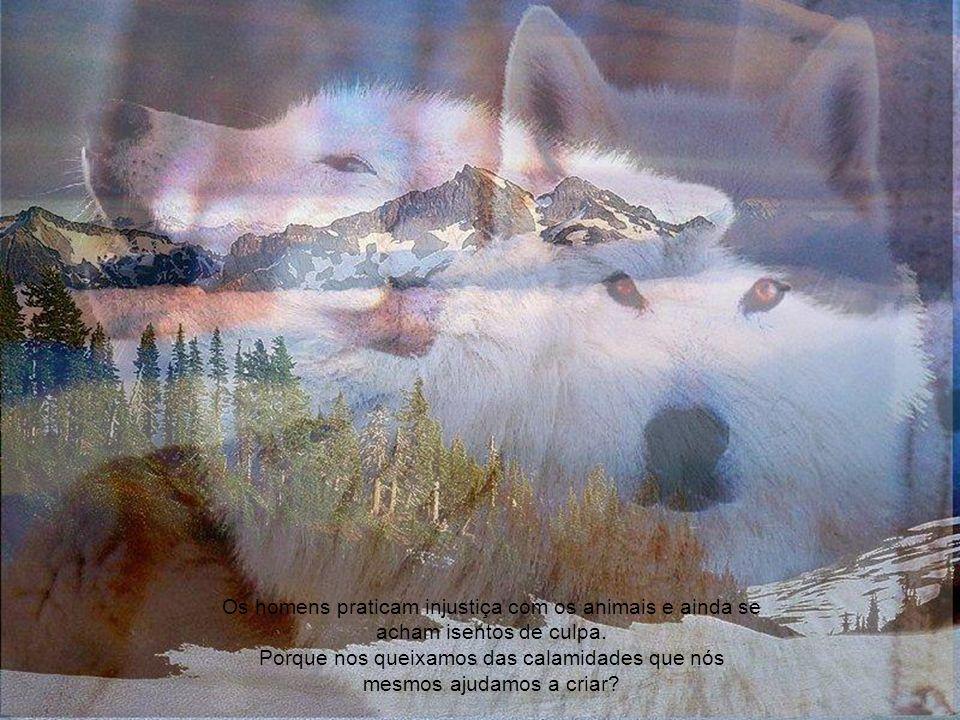 Os homens praticam injustiça com os animais e ainda se acham isentos de culpa.