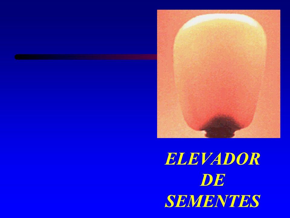ELEVADOR DE SEMENTES