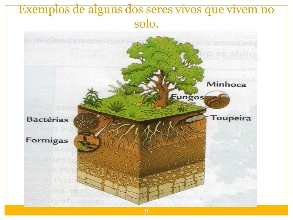 9 Exemplos de alguns dos seres vivos que vivem no solo.