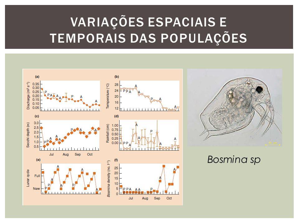 Bosmina sp