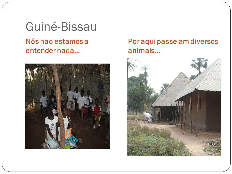 Guiné-Bissau Nós não estamos a entender nada… Por aqui passeiam diversos animais…
