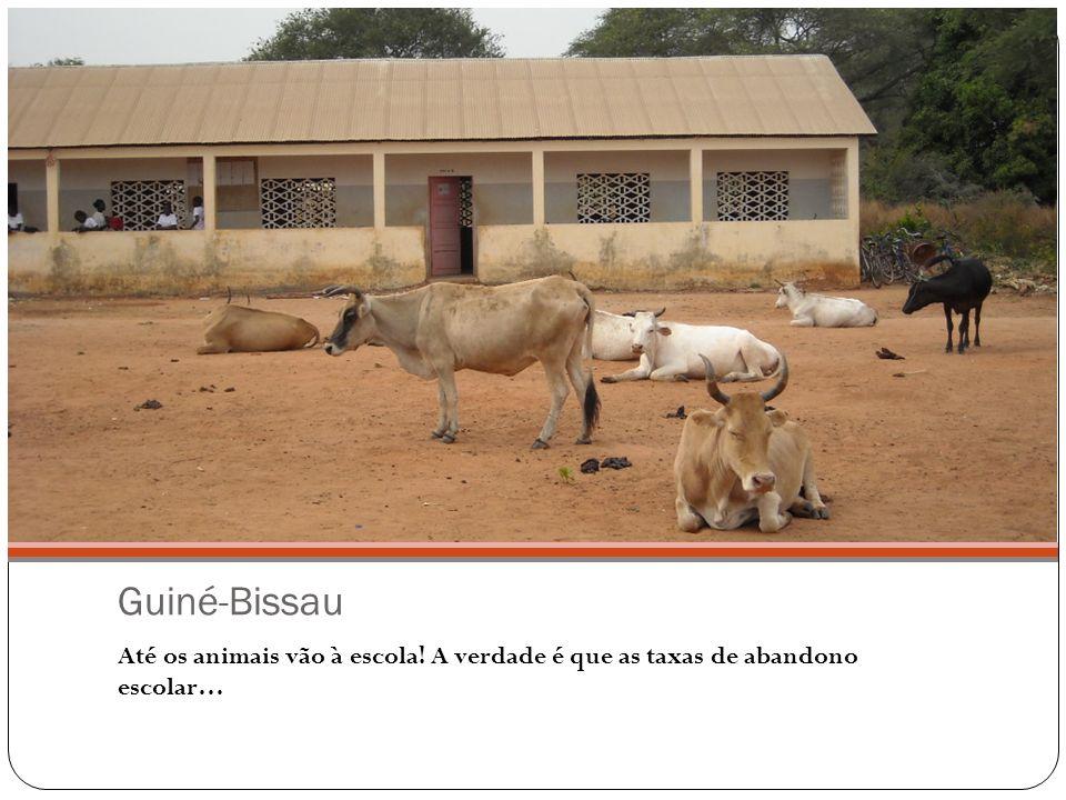 Guiné-Bissau Até os animais vão à escola! A verdade é que as taxas de abandono escolar…