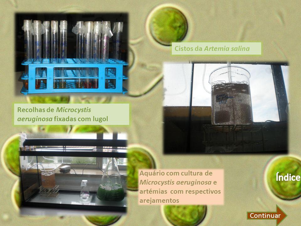 Recolhas de Microcystis aeruginosa fixadas com lugol Cistos da Artemia salina Aquário com cultura de Microcystis aeruginosa e artémias com respectivos arejamentos Continuar