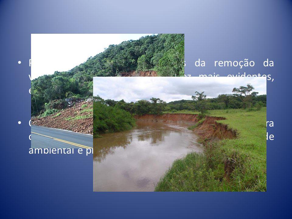 Processos erosivos, decorrentes da remoção da vegetação natural, são cada vez mais evidentes, especialmente nas margens dos rios. O manejo adequado ao