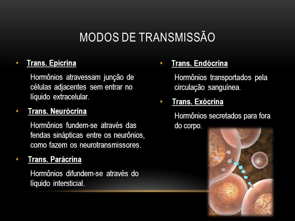 MODOS DE TRANSMISSÃO Trans. Epícrina Hormônios atravessam junção de células adjacentes sem entrar no líquido extracelular. Trans. Neurócrina Hormônios
