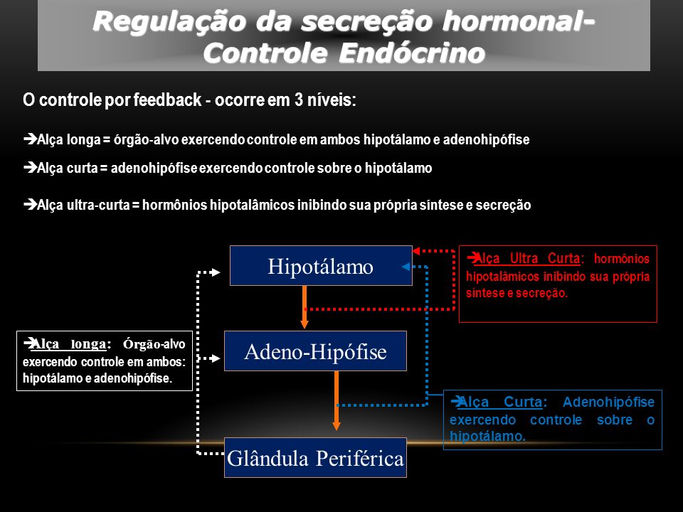 O controle por feedback - ocorre em 3 níveis: Alça longa = órgão-alvo exercendo controle em ambos hipotálamo e adenohipófise Alça curta = adenohipófis