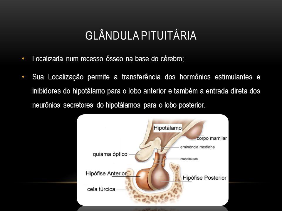 GLÂNDULA PITUITÁRIA Localizada num recesso ósseo na base do cérebro; Sua Localização permite a transferência dos hormônios estimulantes e inibidores d